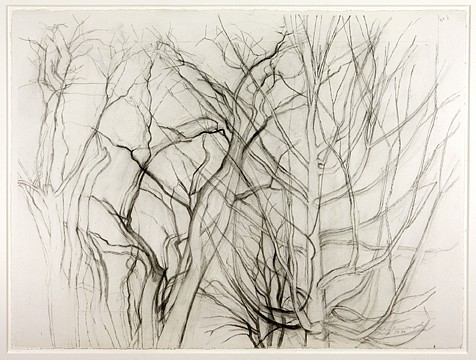 Sylvia Plimack Mangold ,   Study for The Locust Tree with Maple, March 1990  ,  1990     graphite on paper     22 1/2 x 30 1/8 in./57.2 x 76.5 cm     SPM-90-DR-210