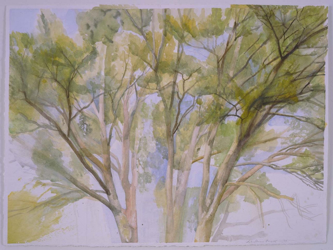 Sylvia Plimack Mangold ,   The Pin Oak 9/20/99  ,  1999     watercolor     22 ¼ x 30 ¼ in/56.6 x 77 cm     SPM-99-DR-267