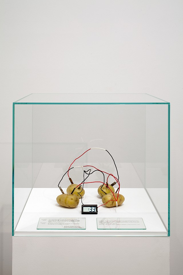 Victor Grippo ,   Tiempo, 2da. versión  ,  1991     potatoes, zinc and copper electrodes, electric wires, digital clock, painted wooden base, glass vitrine and text     overall: 60 1/4 x 19 3/4 x 19 3/4 in/ 153 x 50 x 50 cm 
